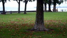 30-Herbst.jpg