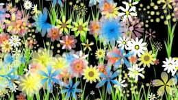 29-Blumenpracht.jpg